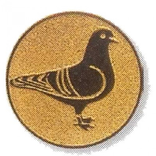 Taubenzucht 02874