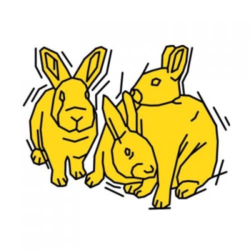 Kaninchen 876
